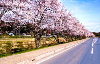 下野川の桜並木